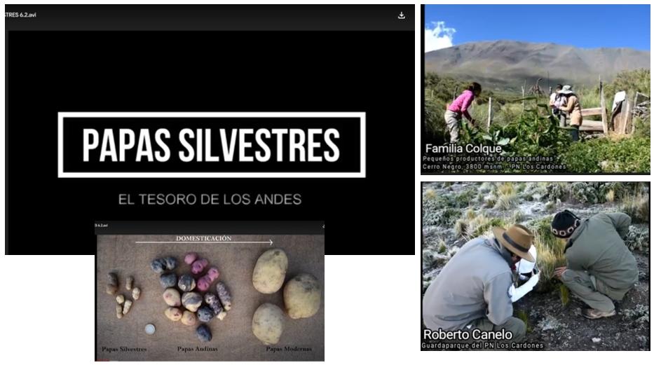 Papas Silvestres: El tesoro de los Andes